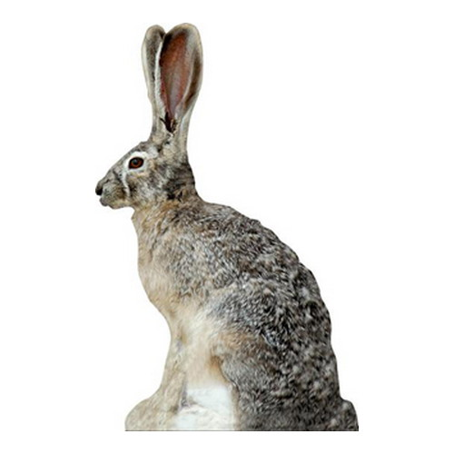 Extreme Dimension Wildlife Extreme Dimension Wildlife Phantom Decoy Jack Rabbit ED-PD-513